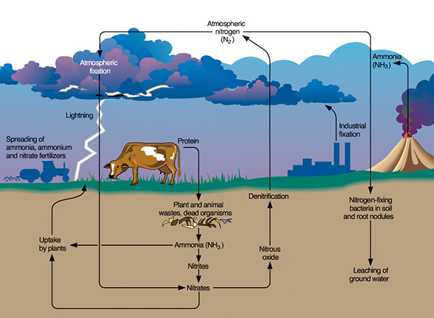 picture  carbon cycle